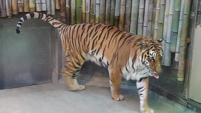 いしかわ動物園 17.jpg