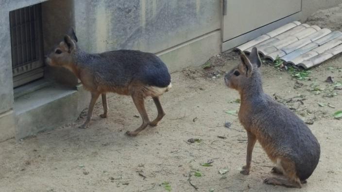 いしかわ動物園 20.jpg