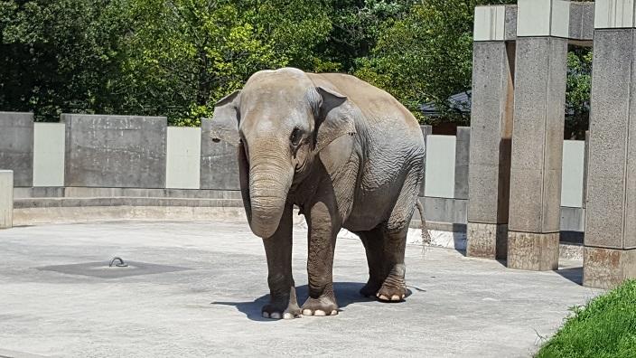 いしかわ動物園 3.jpg
