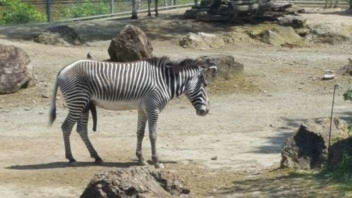 いしかわ動物園 4.jpg