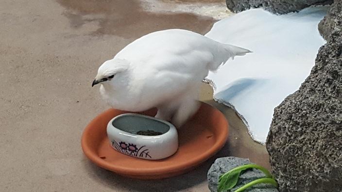 いしかわ動物園 7.jpg