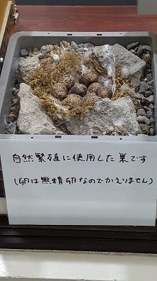 いしかわ動物園 8.jpg