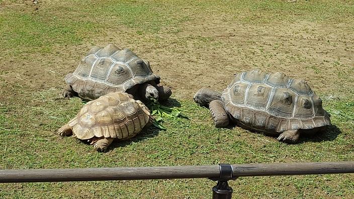 いしかわ動物園 9.jpg